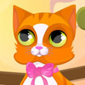 Madame folle de chat Makeover